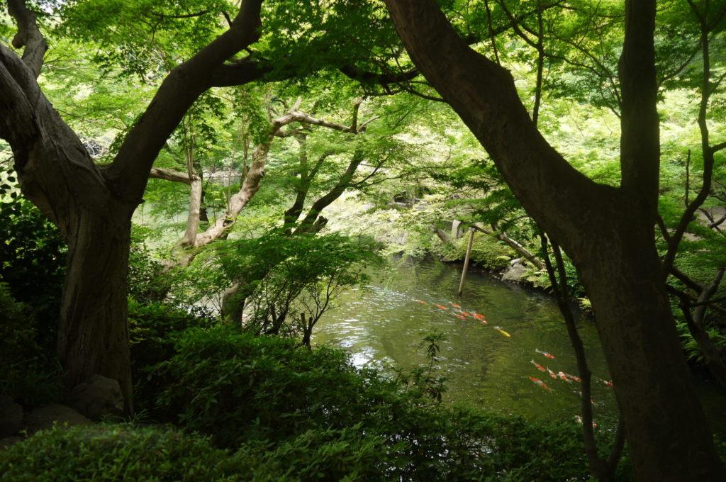 八方園の池