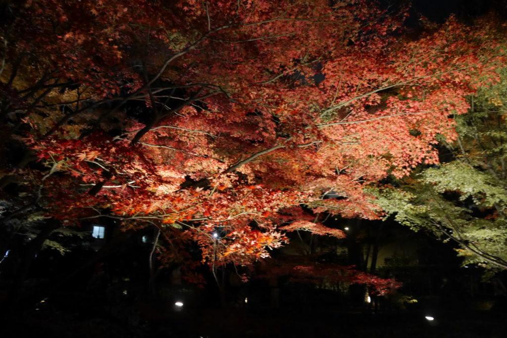 大田黒公園 紅葉